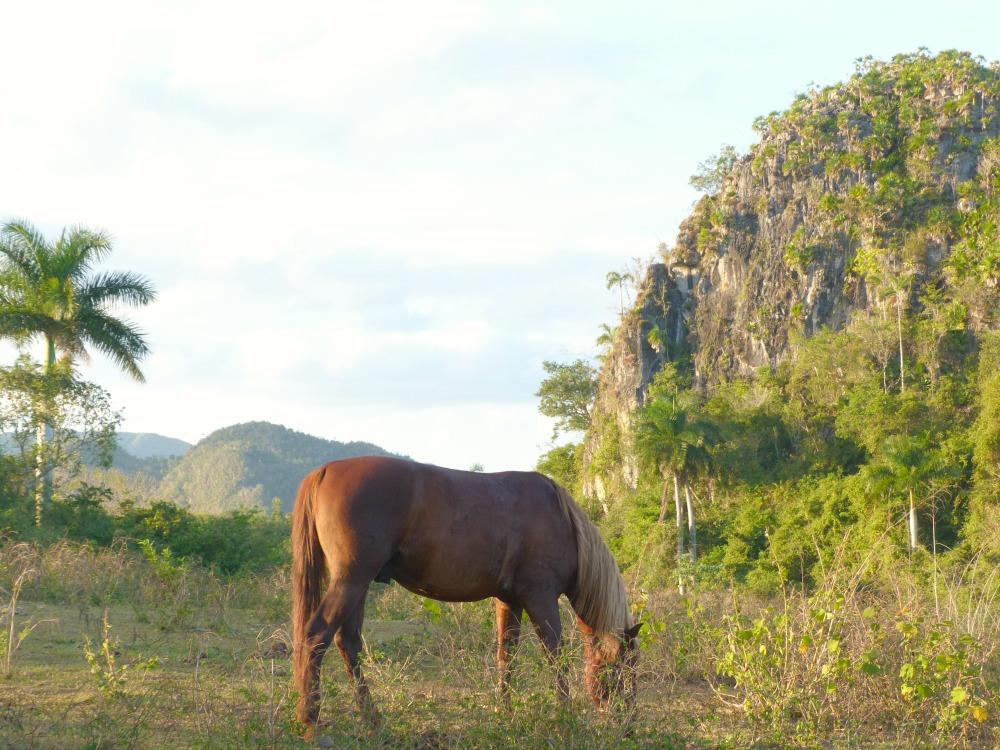 caballos-vinales-tur